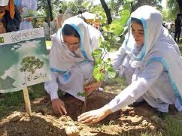 Tree plantation drive being launched on August 9, says Imran Khan