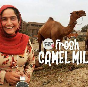 Pakistani camel milk is popular in Chinese market.