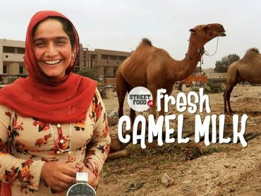 Pakistani camel milk is popular in Chinese market.