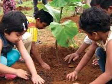 Govt set a target of sapling 3.5 million trees on Aug 09.