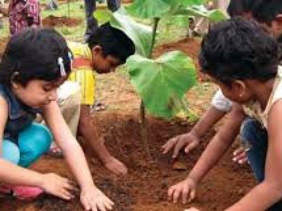 Govt set a target of sapling 3.5 million trees on Aug 09.