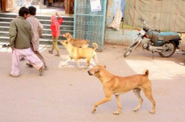 MPA will be suspended if any dog bite incident occurs in his constituency, says Sindh High Court